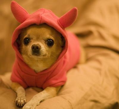 Dognappers terrorise Italian pet owners | www italianinsider it